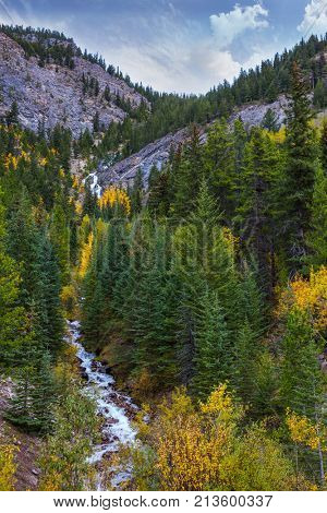 Travel to the Rocky Mountains of Canada. The rough mountain river in a narrow canyon. Deer with branchy horns