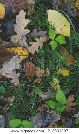 Fallen yellow leaves on the grass in autumn view from above