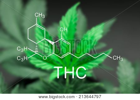 A beautiful sheet of cannabis marijuana in the defocus with image of the formula THC
