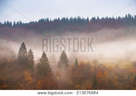 Rain In Autumn Colorful Forest