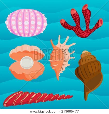 Sea shells marine cartoon clam-shell coralline and ocean starfish vector illustration.. Exotic snail aquarium beauty scallop nature seashell illustration