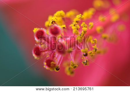Extreme close up of a colourful flower stamen and stigma. flower anatomy macro.