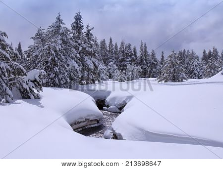 Landscape with winter creek in snowy forest