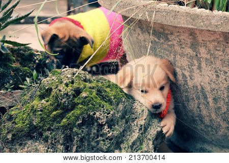 Two cute puppy play together in garden dog is friendly animal and loyal