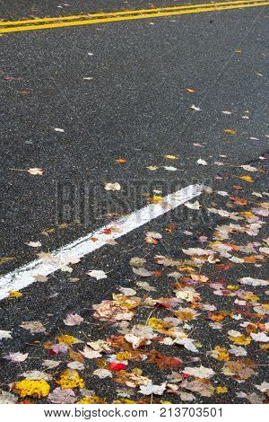 Colorful autumn leaves on asphalt roadway with white and yellow lines vertical aspect