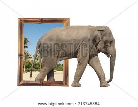 Elephant (Elephas maximus) in bamboo frame with 3d effect. Isolated on white background