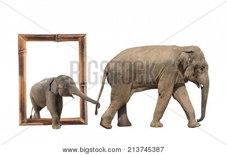 Family of elephant - mom and baby (Elephas maximus) in bamboo frame with 3d effect. Small elephant is held by the trunk by the tail of his mother. Isolated on white background