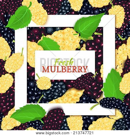 Square white frame and rectangle label on mulberry background. Vector card illustration. Mulberries fruit and leaves for packaging design food juice, jam, ice cream, smoothies, detox, cosmetics, tea.