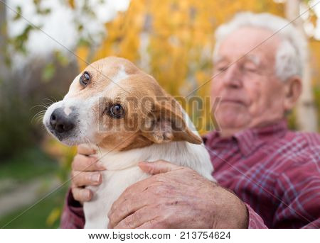 Old Man With Dog In Park