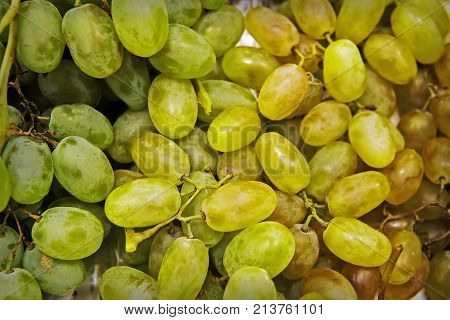 Grape. Grape Harvest. Grape Pattern.