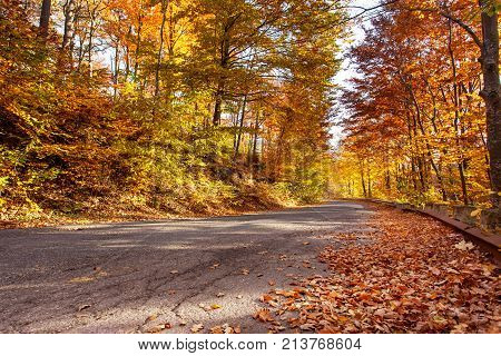 Autumn road with fallen rusty leaves and golden shades in the sunshine