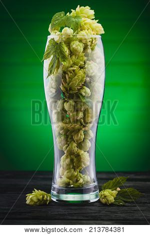 hops in a beer glass on the green background