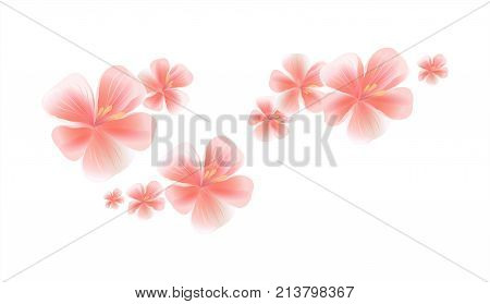 Flying Pink flowers isolated on white background. Apple-tree flowers. Cherry blossom. Vector EPS 10 cmyk