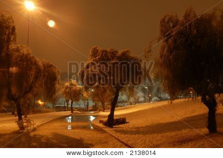 Winter Path In Night And Trees Under Snow