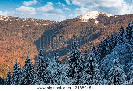 Snowy Conifer Forest In Mountains