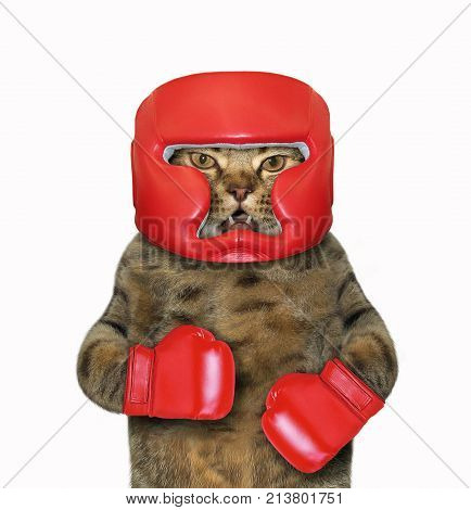 The cat is in red boxing gloves and a red headgear. White background.
