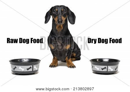 dog of breed dachshund black and tan sitting between two empty bowls with the inscriptions ''raw dog food '' and ''dry dog food''. The dispute between the choice of feed the dog