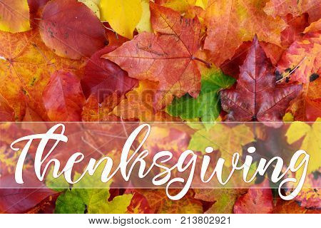 Happy Thanksgiving Greeting, autumn background of color full  leaves