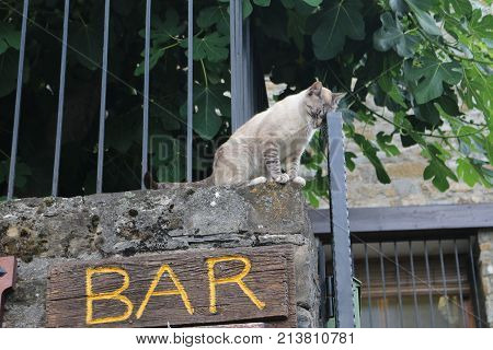 Photo of cat leaning on the gate taking advantage of the word