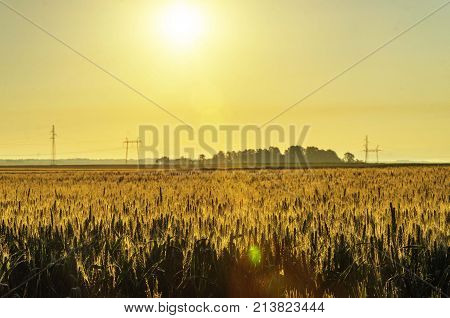 morning nature agricultural grass field landscape. agro
