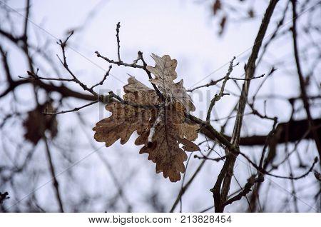 yule log tree flower isolated close up macro