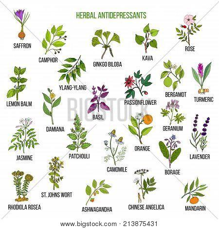 Best herbal antidepressants. Hand drawn vector set of medicinal plants