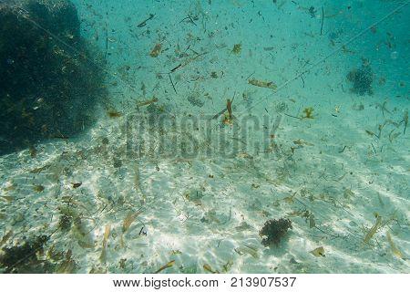 Dirty Ocean Water