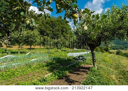 Vegetable crops and apple trees in the summer in France