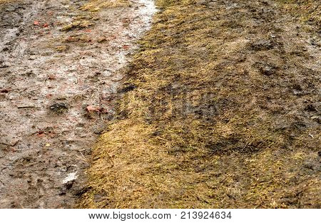 Yellow grass in early spring with mud and snow.