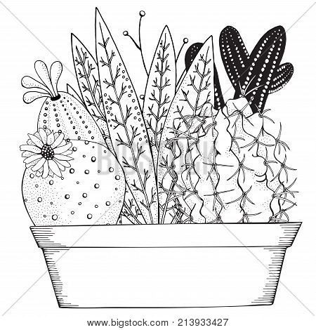 Hand Drawn Set Of Succulents Or Cacti In Pots Doodles Elements Black And White