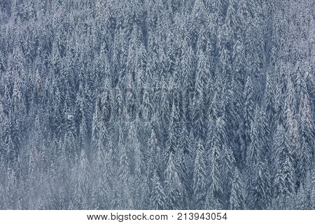 Winter background with snow covered trees. First snow covered idyllic forest in the national park.