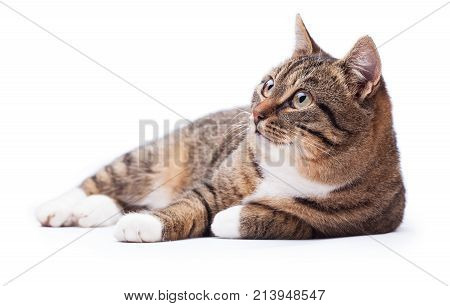 Beautiful cat isolated on a white background
