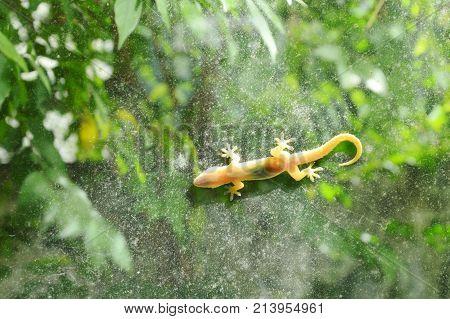 lizard hanging still for sunbathe on glass door with garden background