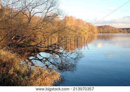 Beautiful countryside landscape with forest and tree dangling above river in autumn day
