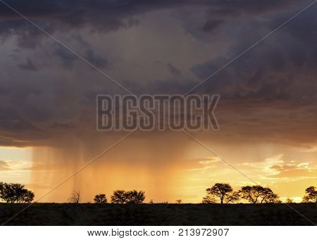 Kalahari rain storm approaching in the late afternoon with some silhouetted trees