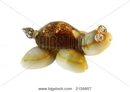 Shell Turtle Isolated