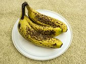 full ripened banana pictures, banana pictures that started to decay and rot poster