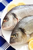 Gilt-head (Sparus aurata) on plate ready to be cooked poster