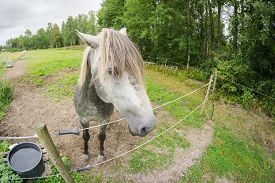 A Grey Horse Looking Close At The Camera Over An Electrical Fence
