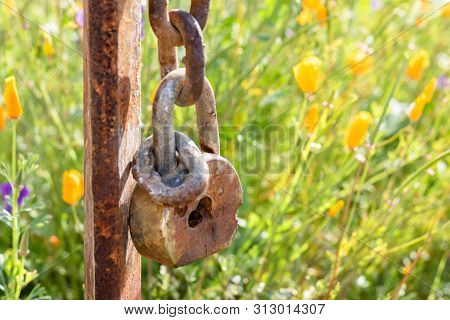 Old Rusted Lock Closeup Hanging On Rusted Post Against Background Of California Wildflower Meadow Fi