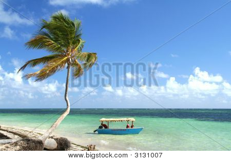 Palm Tree And Boat