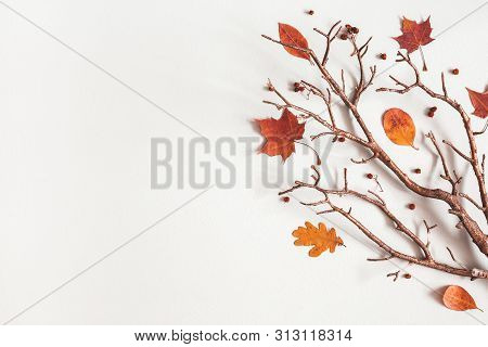 Autumn Composition. Maple Leaves, Branch On Gray Background. Autumn, Fall, Thanksgiving Day Concept.