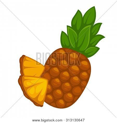 Pineapple fruit isolated on white. Tropical healthy tasty fruit, sweet ananas. Reallistic  of ananas pineapple slices. Organic fresh gourmet pineapple. Botanical illustration in flat style