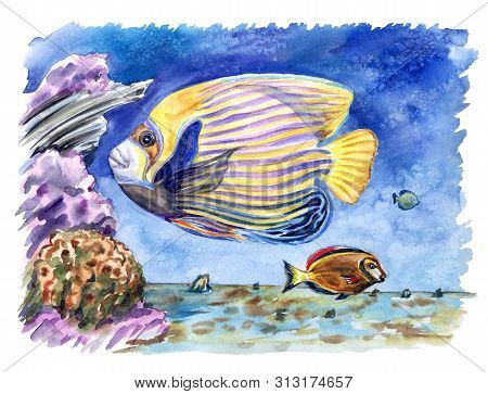 Coral Fish: Imperial Angel (pomacanthus Imperator) And Chocolate Surgeon (acanthurus Pyroferus) Amon