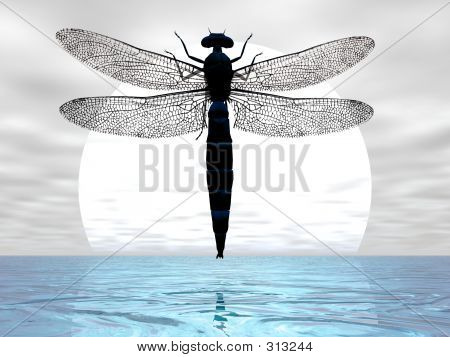 dragonfly flying before the moon poster