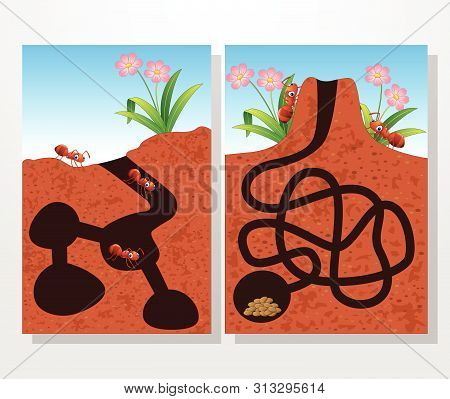 Cartoon Ants Colony Collections Set On White Background