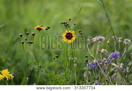 Bouquet Of Wildflowers On A Background Of Green Grass, Still Life On A Field