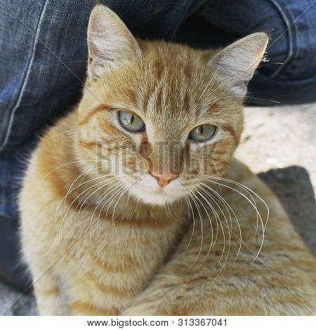 Red tomcat portrait. Tomcat background. Tomcat background. poster