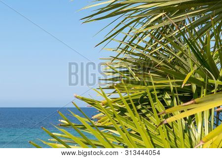 Tropical Landscape With Sea, Sandy Beach And Palm Trees Stock Photo
