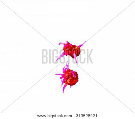 Red Creepy Alien Flesh With Pink Tentacles Isolated On White Background - Colon Of Creepy Monstrous